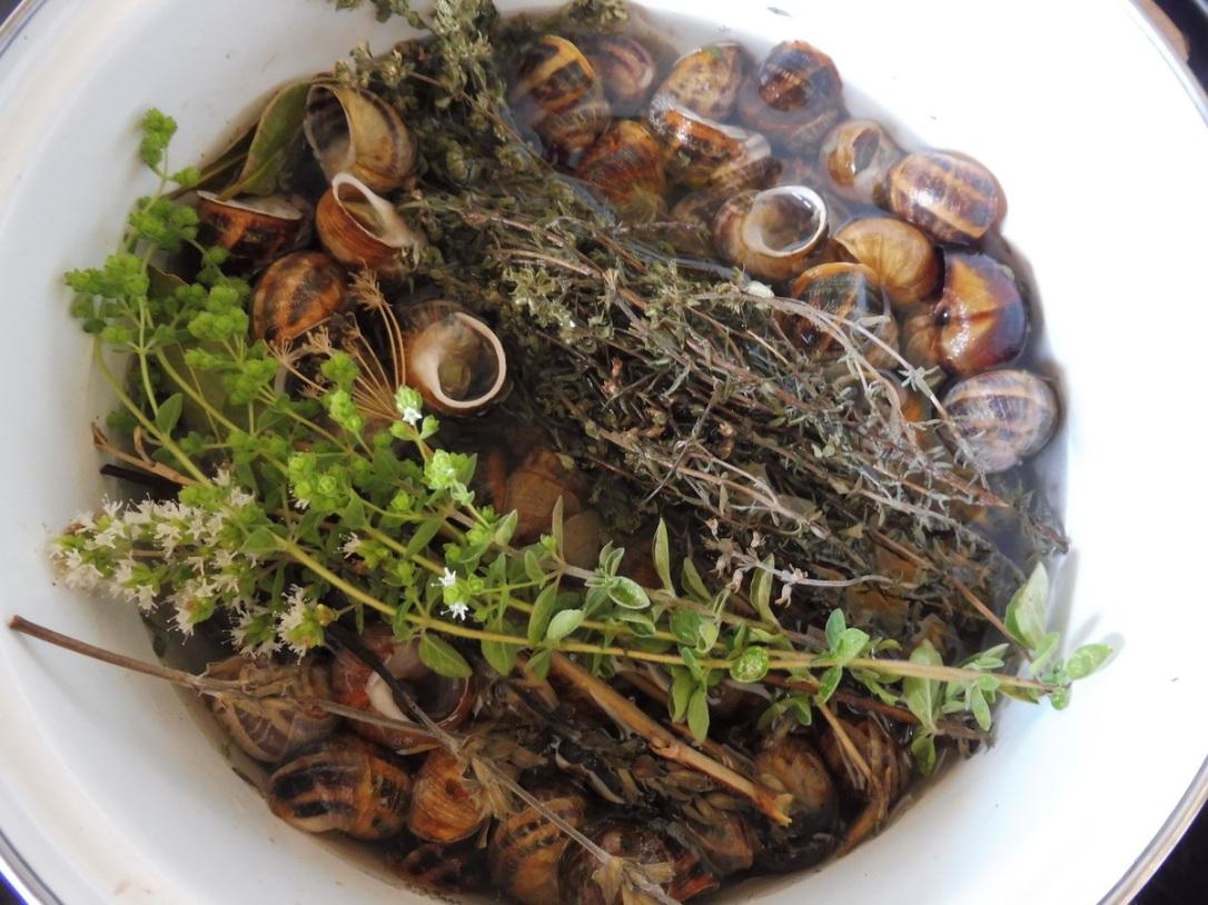 escargot cuit