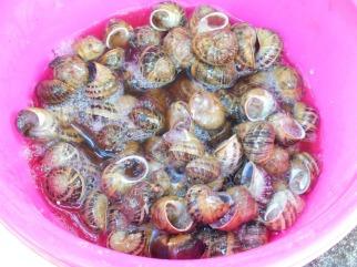escargot vinaigre
