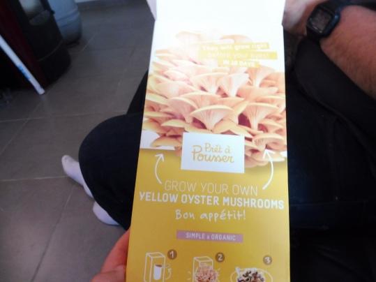 kit champignon1